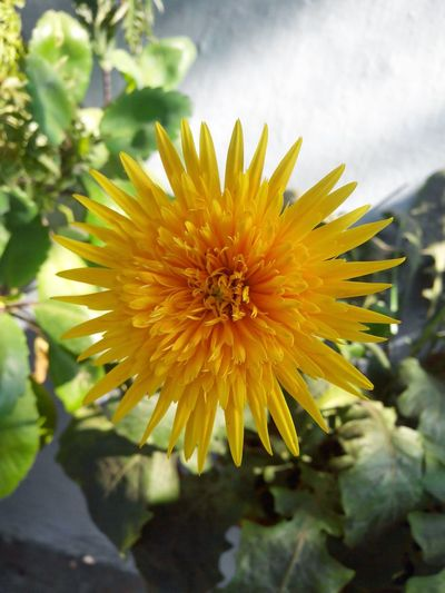 No Edit/no Filter No Edit Flower Flower Photography Yellow Yellow Flower