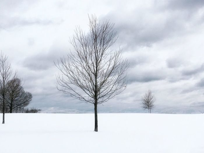 Winter Snow Cold Temperature Bare Tree Landscape Tranquility Cold Beauty In Nature Tree