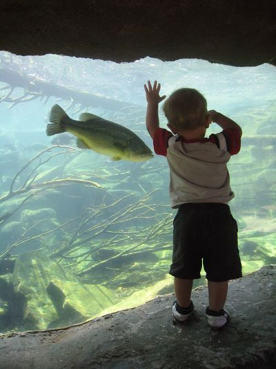 Bass Fish Child Childhood Fish Full Length Hand One Person Rear View