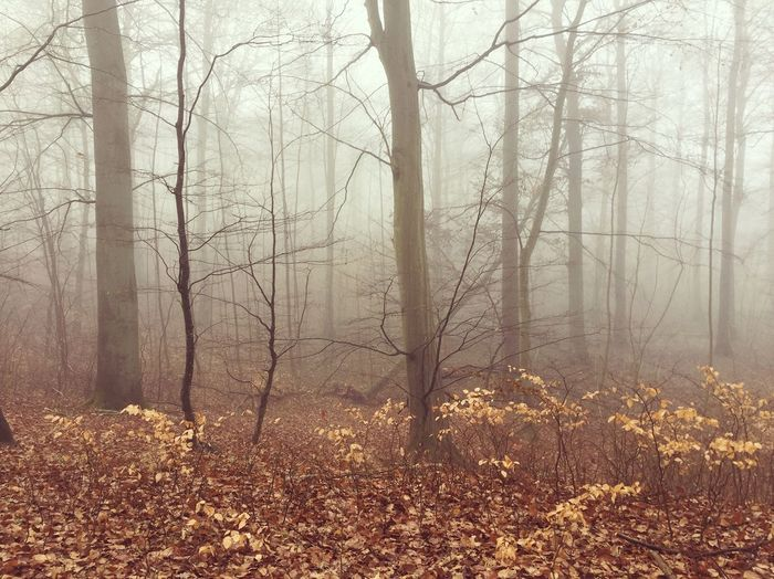 Intothewild Intothewoods Forest Fog