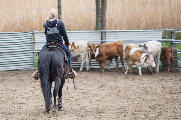 Rodeo Animal Themes Beautiful Beautiful Nature Beauty Beauty In Nature Cattle Cow Cowboy Cowgirl Day Horse Nature Outdoors People People Photography Rodeo Sport Woman Working Animal Enjoy The New Normal