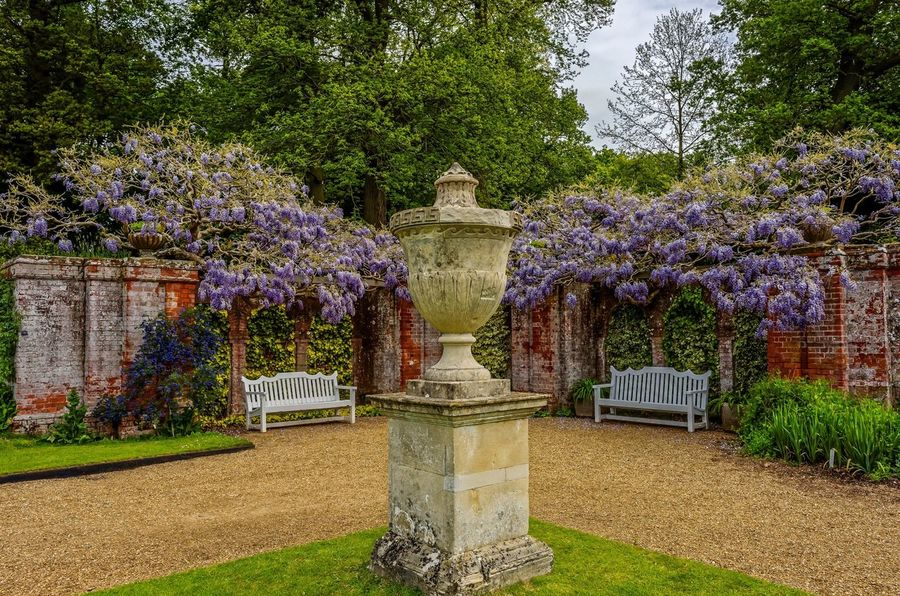 A symmetry of seating. It was the glow of the wisteria against the red brick, that caught my eye. Blickling gardens. Nikon Coolpix A with edit in Lightroom and DXO pro10. Flowers,Plants & Garden Blooming BlicklingHall Norfolk Uk National Trust Plants Symmetry