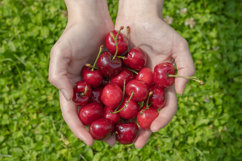 Fruit and nature Hanging Out MR7 Child Childhood Close-up Finger Food Food And Drink Freshness Fruit Garden Hand Hands Cupped Healthy Eating Healthy Lifestyle Holding Human Body Part Human Hand Nature Offspring One Person Plant Red Ripe Wellbeing