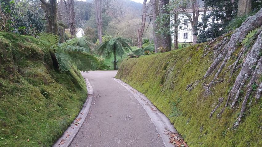 Nearby Furnas @ Azores (S. Miguel) Azores Azores Islands Azores Beauty Botanic Garden Excotic Furnas Furnas(Azoren) Azores, S. Miguel Beauty In Nature Botanic Day Garden Grass Growth Landscape Nature No People Outdoors Road Scenics Sky The Way Forward Tranquility Tree