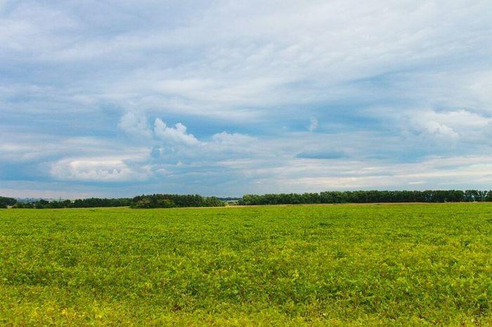 Oldphoto CanonUkraine Field Nature Landscape Photo Summer Sky Clouds