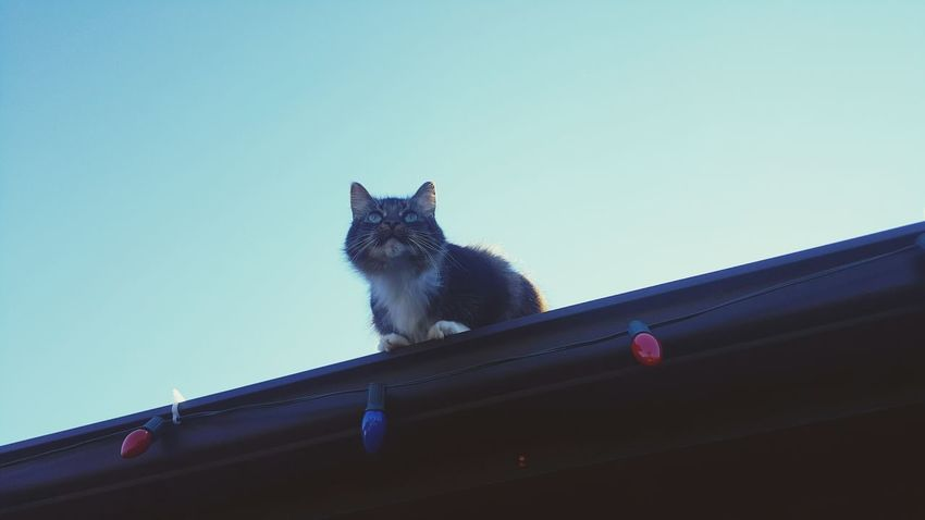 Domestic Cat One Animal Pets Mammal Animal Themes Feline Domestic Animals Sky No People Tabby Cat Low Angle View Indoors  Yawning Day Leopard Cats Of EyeEm Cat