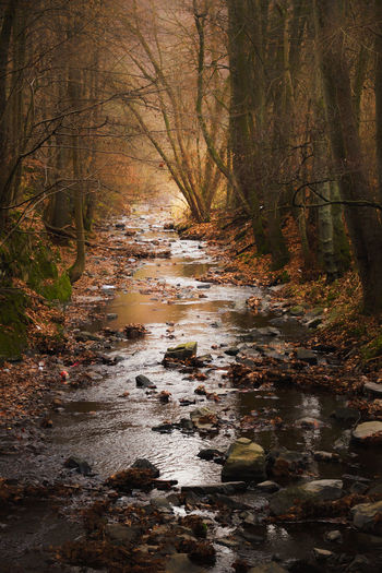 Creek Creekside Rocks And Water Rocks Stones Autumn autumn mood Beautiful Silence Forest Tree Plant Water Land Nature No People Downloading Flowing Water Tranquility Day Stream - Flowing Water Flowing Beauty In Nature Outdoors Scenics - Nature WoodLand Environment Solid My Best Photo