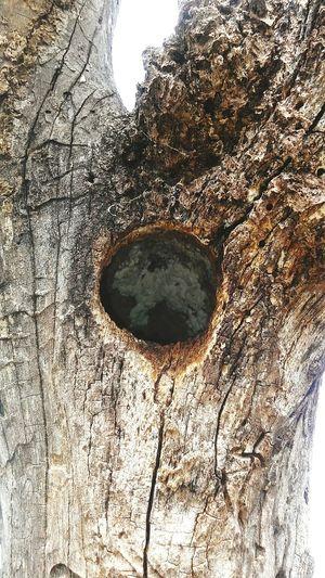 Woodpeckerholes Close-up Circle Geometric Shape