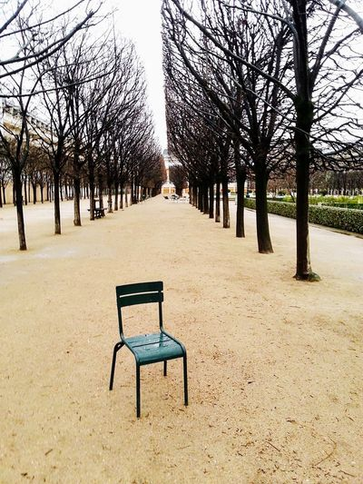 Trees Day No People Nature Outdoors Beauty In Nature Chair Art Chair Bare Tree Sky Tree