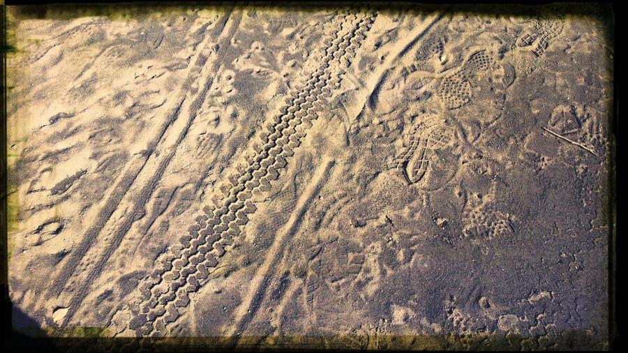 tracks Park Trail Art