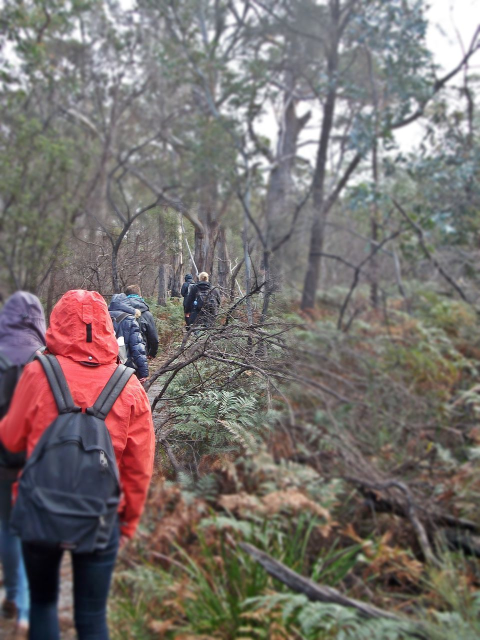 rear view, real people, walking, backpack, tree, nature, leisure activity, men, forest, one person, hiking, beauty in nature, lifestyles, day, outdoors, branch, mammal, people