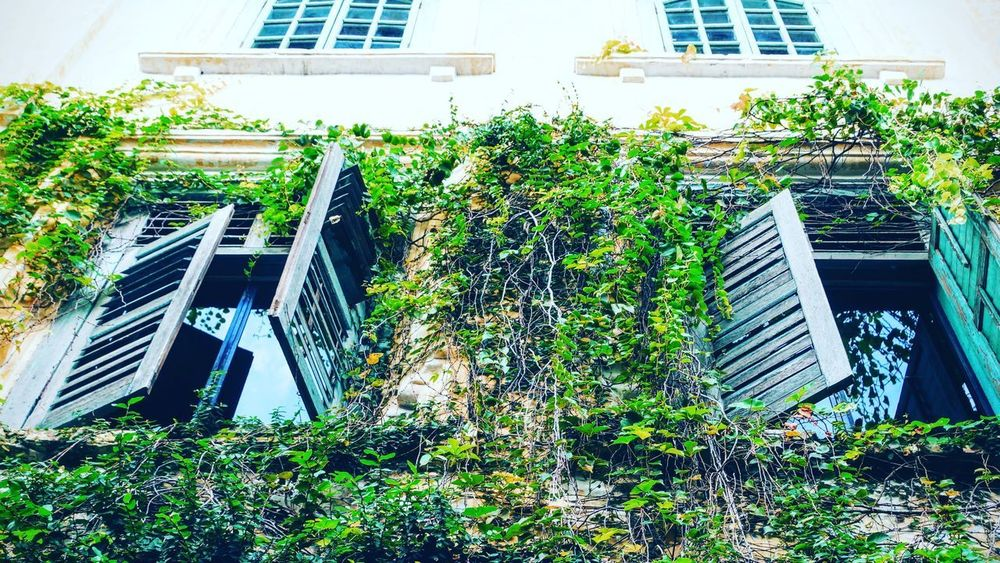 Architecture Building Building Exterior Built Structure City Day Green Color Growth House Leaf Low Angle View Nature No People Office Building Exterior Outdoors Plant Residential District Sunlight Tree Window