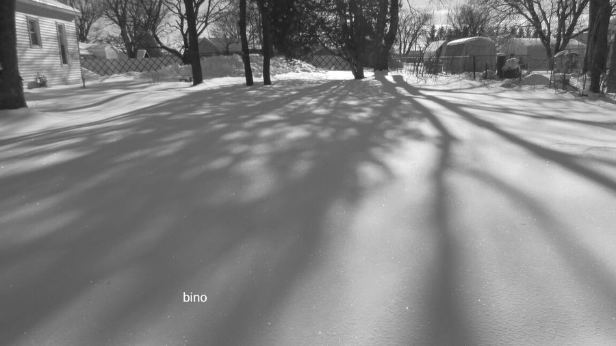 My Neighborhood Cold Temperature Winter_collection Cool_capture_ Right Next Door Endless Shadow Black And White Photography Cadillac Michigan