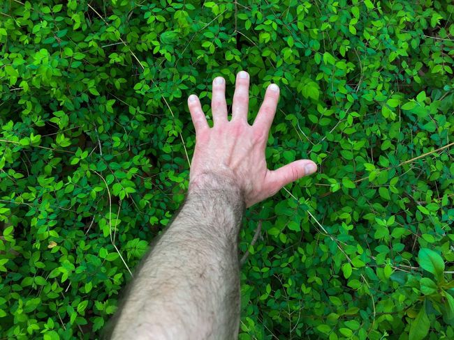 Human Hand Green Color Human Body Part Hand Plant High Angle View Personal Perspective Nature Human Finger Body Part Real People One Person Men
