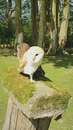 owls on a perch