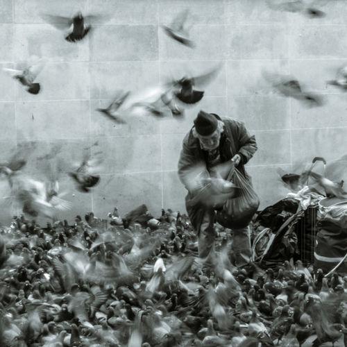Beaubourg Birds Flying Blackandwhite Blur Pigeon Streetphotography Tramp