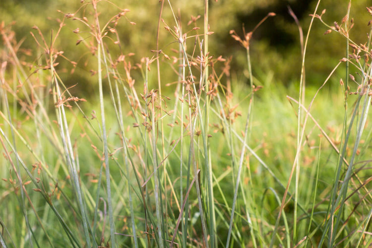 Close-up of grass in field