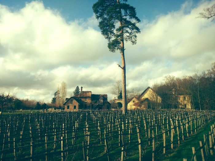 Eye Em Nature Lover Enjoying Life Farm Life Wineyard Old Wineyard Versailles