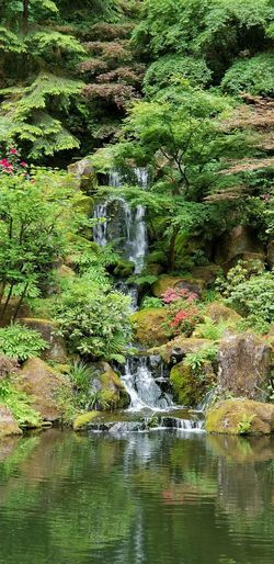 waterfall at Japanese Tea Garden Greenery Flowers Moss Plants Water Day Water Tree Waterfront Forest Reflection River Motion Flowing Water Waterfall Falling Water Power In Nature Flowing Moss Growing