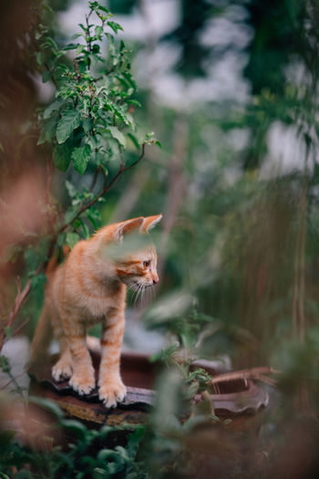 Mammal Cat Domestic Animals Domestic Pets Feline Domestic Cat Vertebrate No People Animal Themes Animal Plant One Animal Selective Focus Nature Growth Tree Day Land Looking Whisker