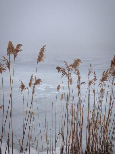 Beachgrass Pond EyeEm Best Shots TheWeekOnEyeEM Simplicity Eye4photography  Onthebeach Spring! Foggy Morning Shoreline