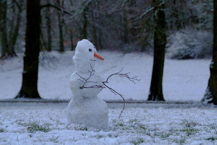 Animal Themes Animals In The Wild Beauty In Nature Bird Close-up Cold Temperature Day Nature No People One Animal Outdoors Park Schneemann Bauen Snow Tree Tree Trunk White Color Winter
