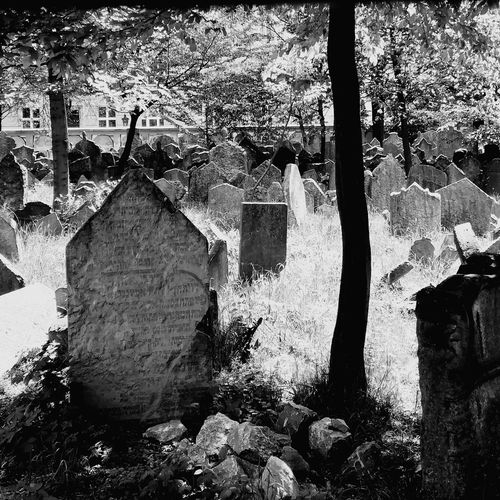 Josefov Cemetery Cemetery Photography Old Jewish Cemetery Old Jewish Quarter Jewish Memorial Czech Republic Cz Prague Praga♥ Close-up Gravestone Memorial Civilization War Memorial Adventures In The City The Photojournalist - 2018 EyeEm Awards The Traveler - 2018 EyeEm Awards