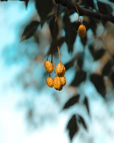 get aomething Best EyeEm Shot Bestoftheday Macro Macro Photography Nature Photography Macro_collection Moody Nature Orange And Teal Hanging Close-up