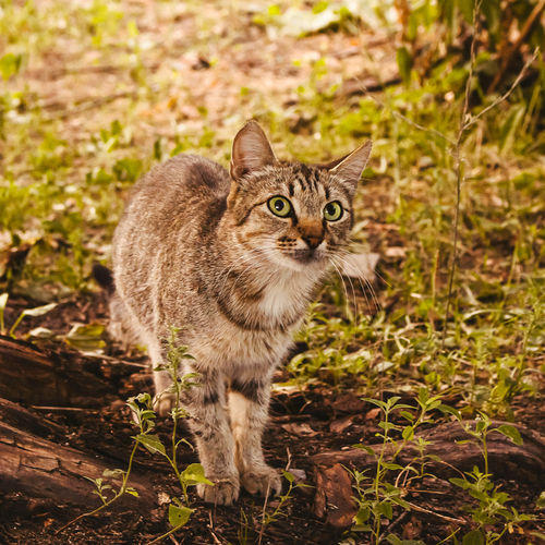 Portrait of cat standing on land