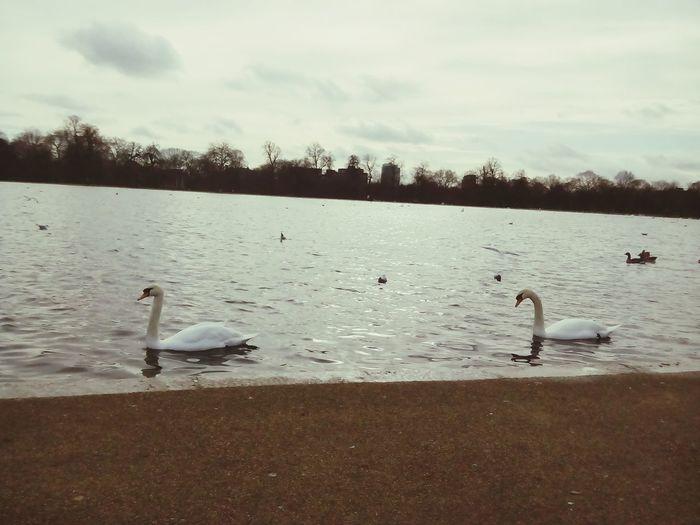 London February 2017 Kensington Gardens Hyde Park London
