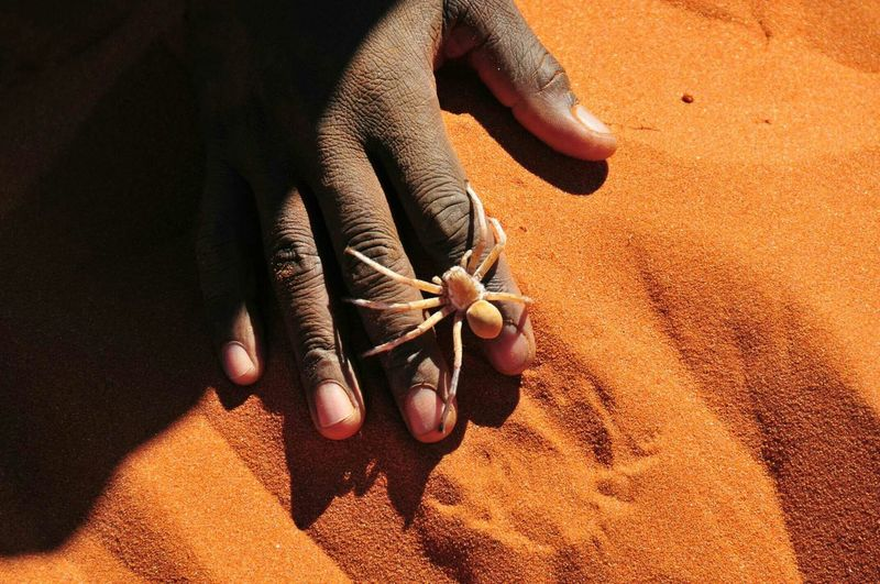 Deserts Around The World Spider, moving over the Hand of our Guide, lives in the Red Sandsof Namibia Wolwedans Namibrand Nature Reserve Namib Naukluft National Park (c) 2015 Shangita Bose All Rights Reserved My Best Photo 2015 The KIOMI Collection The Great Outdoors With Adobe Nature's Diversities Original Experiences Feel The Journey Natural Light Portrait 43 Golden Moments