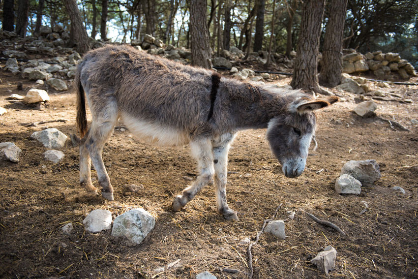 Donkey outdoors Aitana Animal Animals In The Wild Day Domestic Animals Domesticated Donkey Forest Horse Miniature Horse No People One Animal Outdoors Safari Park Standing Zoo