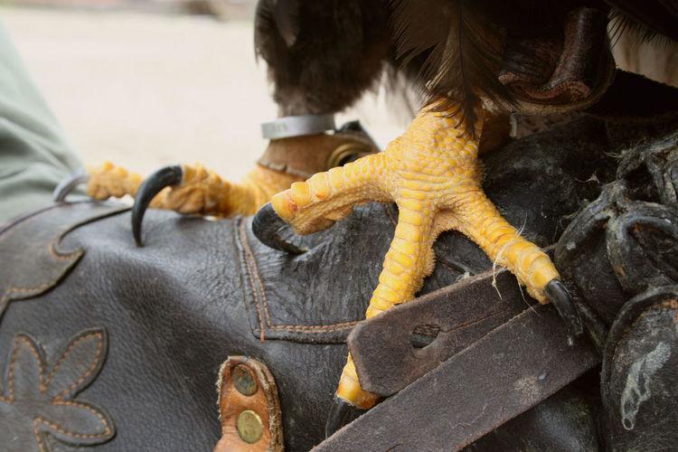 Close-up of bird leg