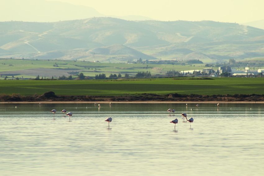 Cyprus Larnaca, Cyprus Larnaca Nature Photography Nature_collection Bird Flamingos Mountain Range Salt Lake Water Nature Mountain Outdoors Beauty In Nature Real People Day Scenics Landscape Lake Sky Men People