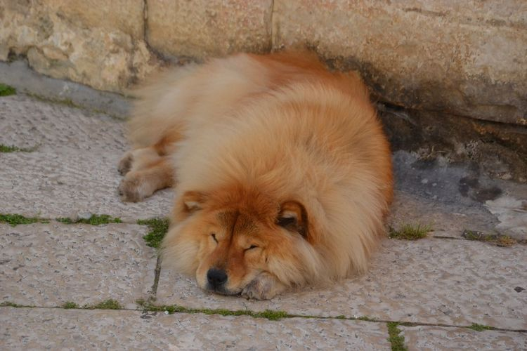 Mammal Animal Themes One Animal Animal Vertebrate Domestic Animals Pets No People Domestic Day Footpath Canine Brown Lying Down Cat Dog Feline Portrait Resting Relaxation