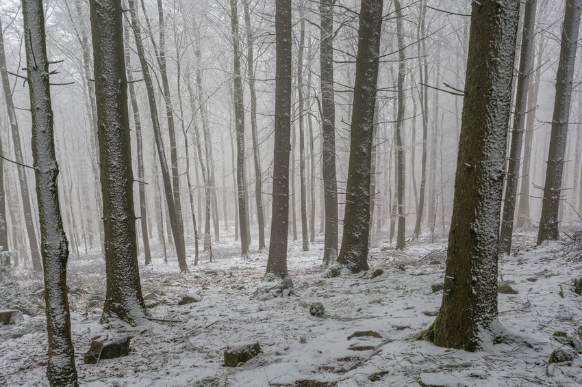 Beauty In Nature Birch Tree Cold Temperature Day Environment Fog Forest Landscape Nature No People Outdoors Scenics Snow Tree Tree Trunk Winter Winterwald WoodLand