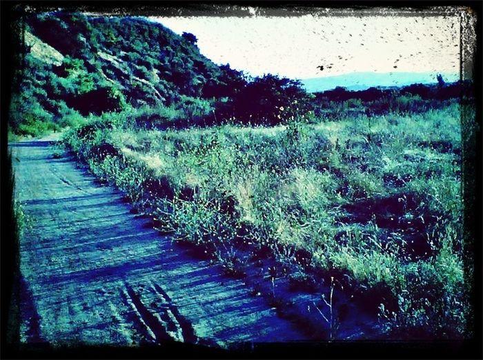 Trailrunning Nature