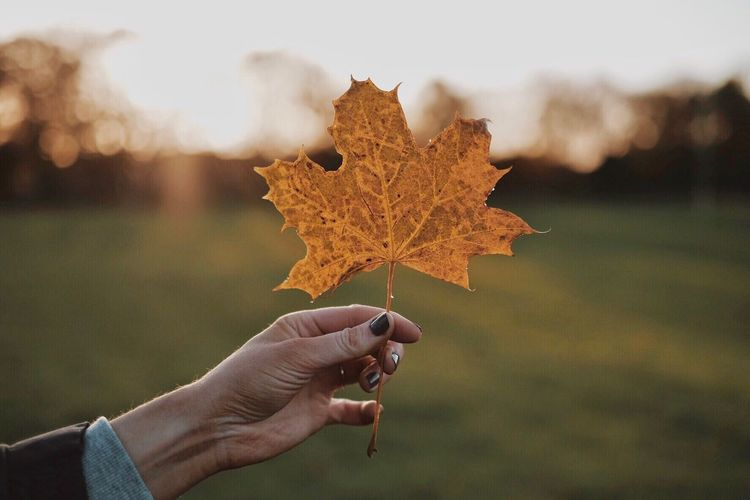 EyeEm Selects Human Hand Autumn Leaf Holding Real People One Person Focus On Foreground Human Body Part Maple Leaf Unrecognizable Person Outdoors Personal Perspective Human Finger Change Day Close-up Nature Maple Lifestyles Beauty In Nature