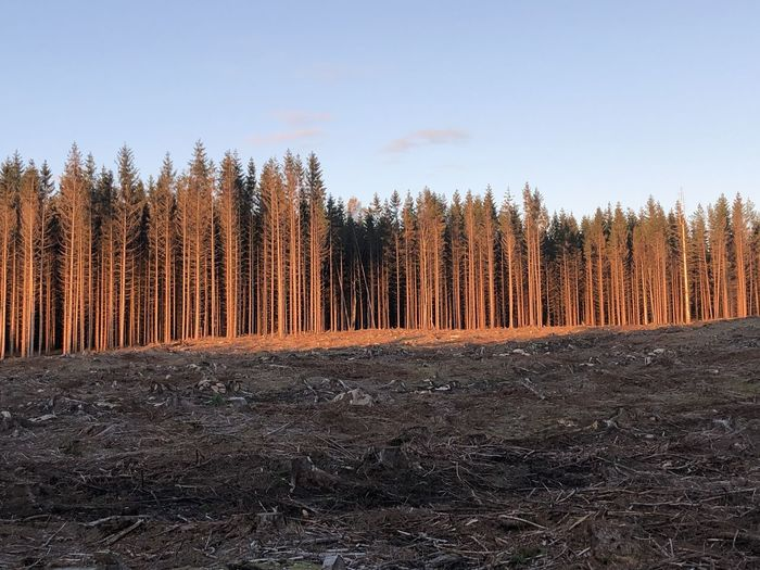 Panoramic shot of trees in forest against sky