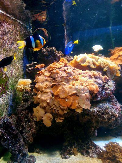 Natavega Akvaryum Aquarium Ankara/turkey Around The City  With My Children Anemon Mercan Coral Palyaço Balığı Under The Water