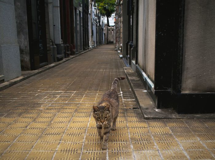 No People Recoleta Cemetery Argentina Photography Feline One Animal Cats Tranquility