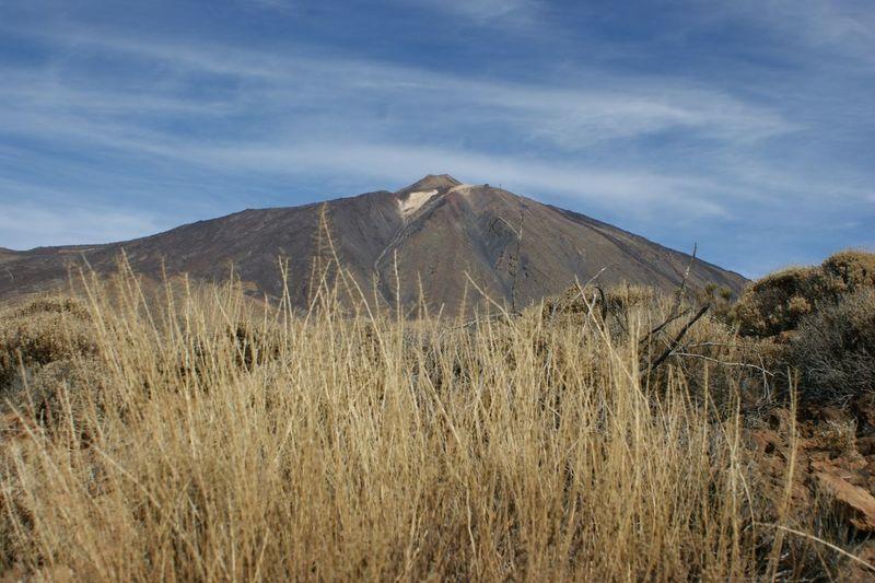 Teide Mountain Tree Sky Landscape Volcanic Landscape Volcano