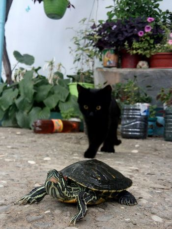 Animal Themes Zoology Animal Turtle Cat Pets Focus On Foreground Mobilephotography LeEco LeTv X600 Letv