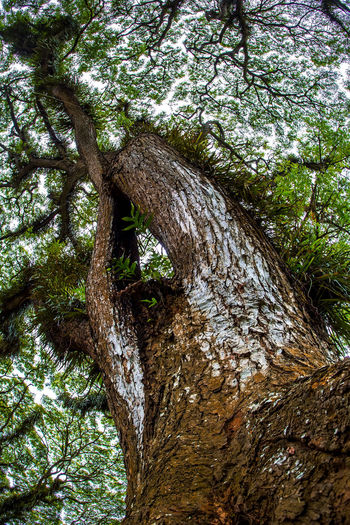 big tree Tree Big Tree Big Trees Big Trees. Old Tree Tree And Sky Tree Canopy  Tree Photo Tree Photography Tree_collection  Tree Colections Tree Area Tree Growing On Top Tree Growing Growing Green Nature_collection Nature Nature Photography Naturelovers Nature Collection