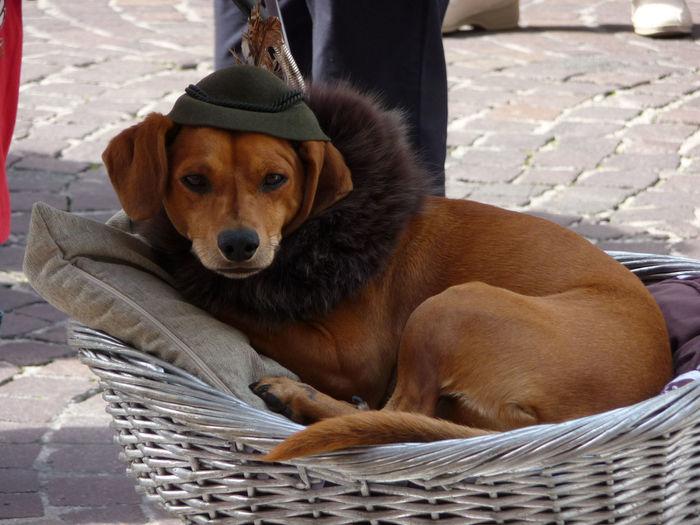Portrait Of Dog Sitting On Wicket Basket