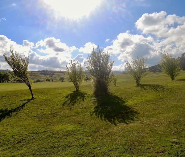 Plant Sky Growth Sunlight Grass Beauty In Nature Tree Cloud - Sky Nature Green Color Tranquility Day Scenics - Nature Field Tranquil Scene No People Land Landscape Shadow