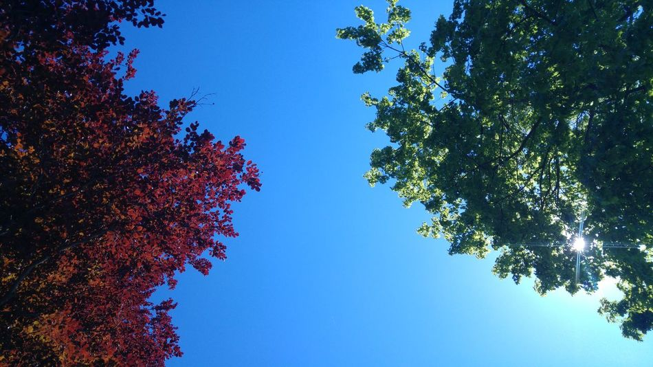 Tree Blue Low Angle View Growth Sky No People Fruit Branch Outdoors Beauty In Nature Nature Day Clear Sky Freshness Close-up