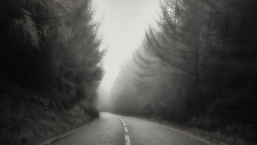 Tree Cyclone Fog Road Sky Empty Road Mountain Road Diminishing Perspective Treelined Road Marking Dividing Line Asphalt Car Point Of View The Way Forward Winding Road vanishing point Country Road