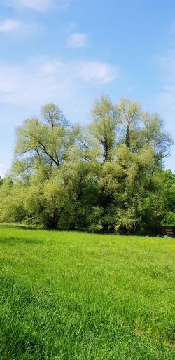 Tree Water Sky Grass Green Color