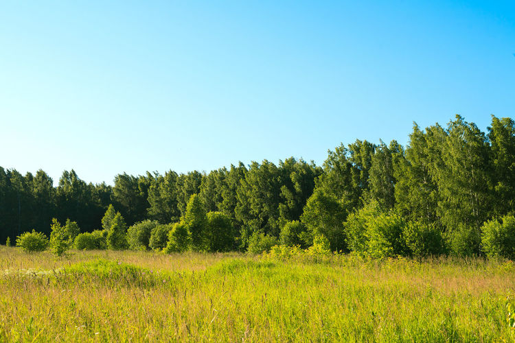 Beauty In Nature Blue Clear Sky Day Environment Field Grass Green Color Growth Land Landscape Nature No People Non-urban Scene Outdoors Plant Scenics - Nature Siberia Sky Tranquil Scene Tranquility Tree
